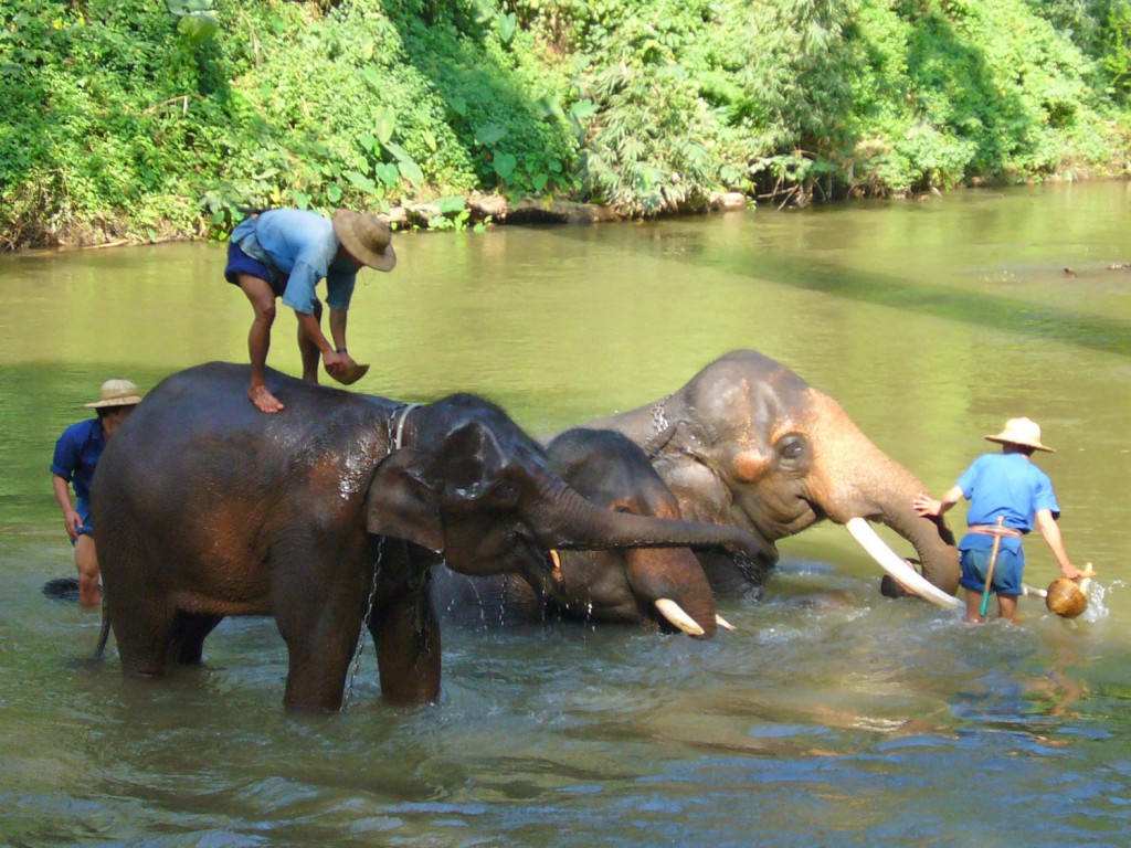 8.thailand-online-mahout